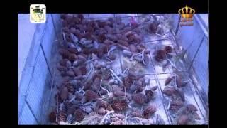 Download الزراعة في الأردن - الثروة الحرجية Video