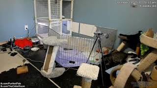 Download Fantastical Kittens - Mama Redecorates Video