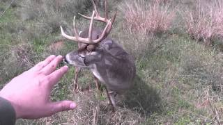 Download Hunter Stalks & Touches Nice Buck Video