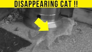 Download 5 Animal Teleportations Caught On Camera & Spotted In Real Life! Video