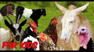 Download For Kids: RARE FARM ANIMALS - chicken, horse, cattle, goats, sheep, poultry, film for children Video