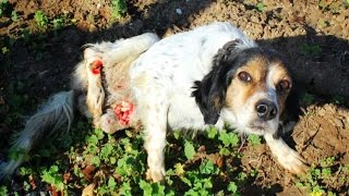 Download Dog with two broken legs crawls over rocks for a week seeking help. Please share Video