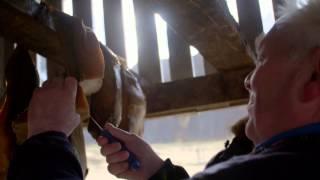 Download The tradition of eating shark aka Hákarl | #AskGudmundur Video