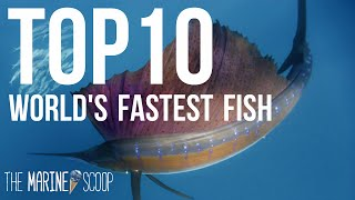 Download TOP 10 FASTEST FISH IN THE OCEAN Video