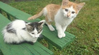 Download New 6 kittens live on the street Video