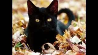 Download Black Cat Secrets Video