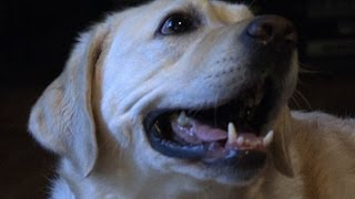Download Do dogs experience emotions like humans? Video