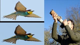 Download How to Photograph Birds Against Bright Sky Video