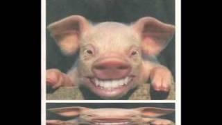 Download il ballo del maiale Video