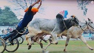 Download Ox Marathon Co. (Rai Balihar Gobindpur)(Doaba) 2017-18 (Over 1 Million Views!) Video