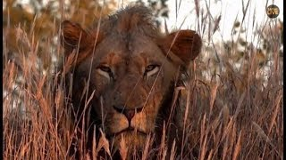 Download Pt 1 Safari Live's Sunrise Safari Drive at 6:30 AM on May 07, 2018 ( Avoca Male ) Video