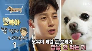 Download 세상에 나쁜 개는 없다 - 오복아 밥먹자 이자슥아 #001 Video