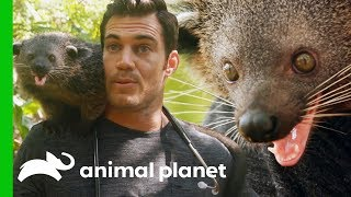 Download Dr. Evan Antin Bonds with an Incredibly Friendly Palawan Bearcat | Evan Goes Wild Video