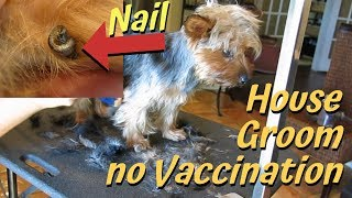 Download I helped groom a dog at home with no vaccinations Video