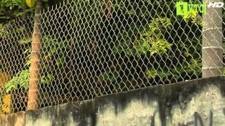 Download phong thủy hàng rào(p2) Video