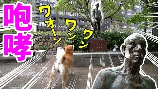 Download 柴犬小春 素っ裸の『老人』像に爆吠え!SONY 広角ズームレンズ E 10-18mm F4 SEL1018 Video