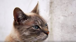 Download Cats Speaking Our Language | Cats Uncovered | BBC Video