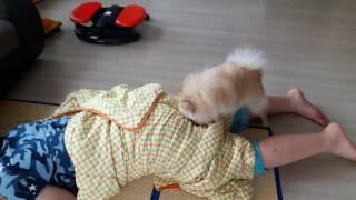 Download 강아지가 방귀냄세를 좋아한다고???ㅋㅋㅋ Video