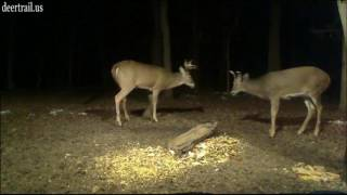 Download I'll Be Watching For early Sheds This Year (Antlers Falling Off) Video