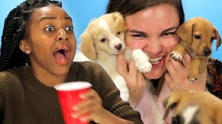 Download Drunk Girls Get Surprised With Puppies Video