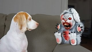Download Cute Dog vs. Evil Bunnies: Cute Dog Maymo Video