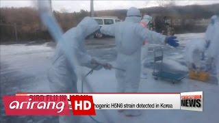 Download Japan says bird flu is same H5N6 strain detected in Korea Video