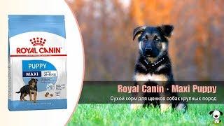 Download Сухой корм для щенков собак крупных пород от 2 до 15 месяцев · Royal Canin Maxi Puppy Video