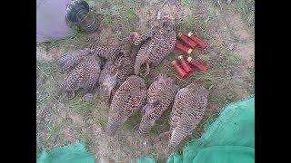 Download Black Partridges Hunting In Pakistan || new teetar hunting || hunting 2017 || hunting 2018 Video