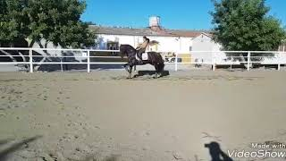 Download CIRUJANO - High school schoolmaster and flying changes For Sale with TBSH Video