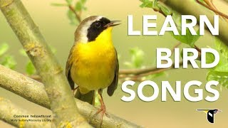 Download Learn Bird Songs - Bird Academy Video