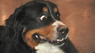 Download Funny Dogs Scared of Farts Compilation (2015) Video