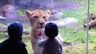 Download 10 MOST STUNNING MOMENTS AT THE ZOO Video