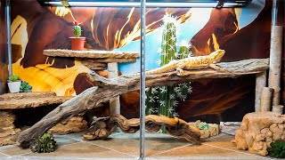Download Building a Bearded Dragon Tank Video