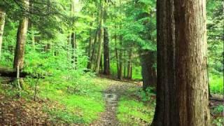 Download 2 minutes nature walk Video