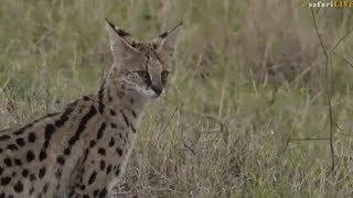 Download Pt 1 Safari Live's Sunset Safari Drive at 3:30 PM on Sept 13, 2017 ( Nkuhuma's & Hosana ) Video