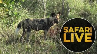 Download safariLIVE - Sunrise Safari - May, 24. 2018 Video