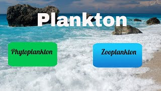Download Difference between Zooplankton and Phytoplankton Video