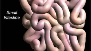 Download Call Me Maybe (Digestive System Parody) Video