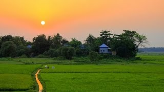 Download আমাদের গ্রাম (আলীপুর) An Aerial Video of our Beautiful Village in Bangladesh. DJI Phantom 3 👍🚁✌😁 Video
