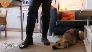 Download Hundetraining mit der Hundeflüsterin Video