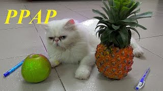 Download Pen Pineapple Apple Pen - PPAP Song | PPAP Cat Version | Meo Cover Home Video