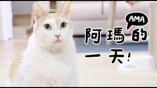 Download 【黃阿瑪的後宮生活】阿瑪的一天! Video