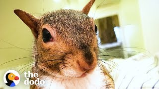 Download This Rescued Squirrel Is The Ultimate Diva | The Dodo Video