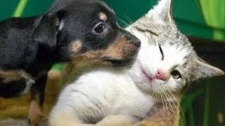Download Kittens Meet Puppies For The First Time Try Not to Laugh! - Cats Meeting Dogs, Funny Kitty Cats Video