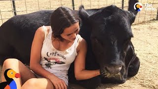 Download Teen Rescues Farm Animals From Craigslist & Gives Them a Second Chance | The Dodo Video