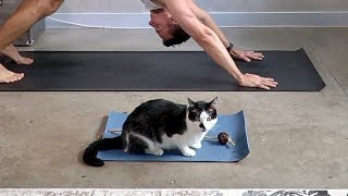 Download Kitty Zens Out On His Very Own Yoga Mat Video
