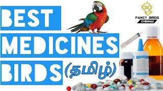 Love bird tail bobbing disease and solution(in Hindi/ Urdu