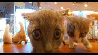 Download 360°Cat 子猫360° @pet shop Video
