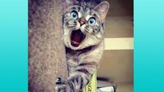 Download 【かわいい猫】絶対笑う、おもしろ猫、思わず吹き出すハプニング集【これってマジ…!?】 Video