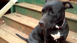 Download Leula My ″talking″ dog Video
